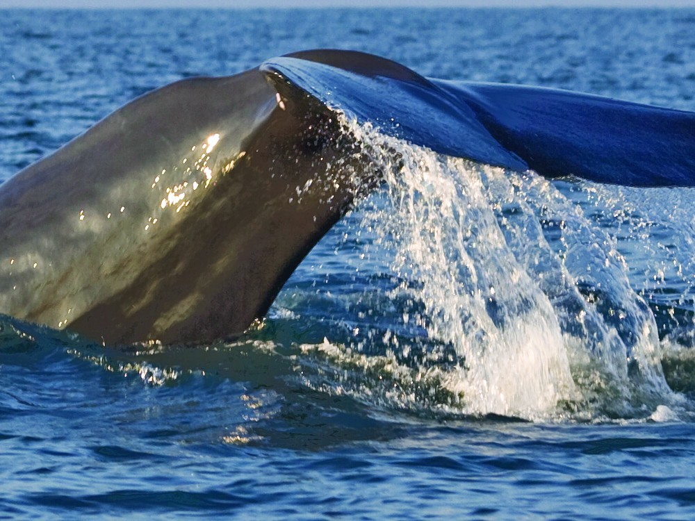 Go whale watching in Sri Lanka