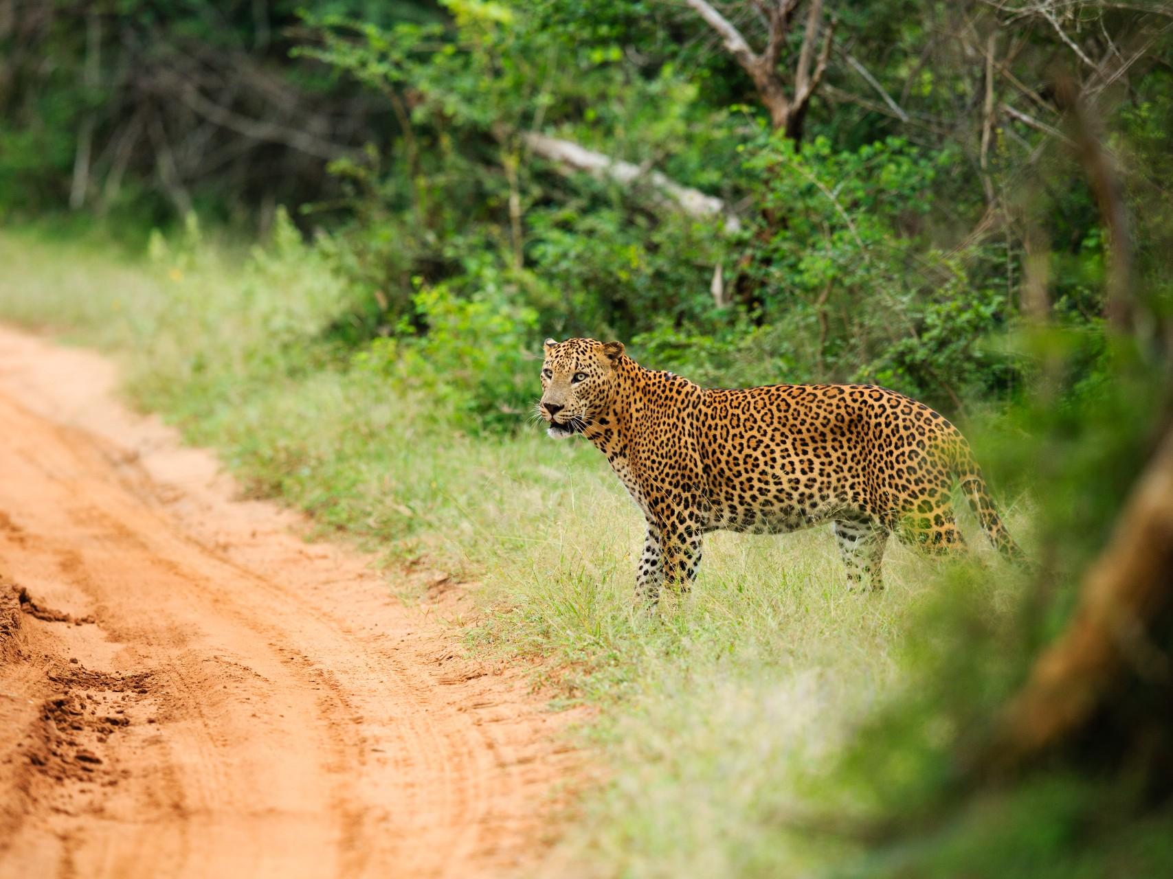 Wildlife at Yala National Park, Sri Lanka